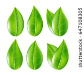 set of realistic green leaves... | Shutterstock .eps vector #647108305