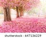 the romantic tunnel of pink... | Shutterstock . vector #647136229