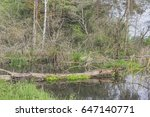 overgrown forest river in... | Shutterstock . vector #647140771