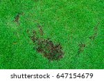pests and disease cause amount... | Shutterstock . vector #647154679