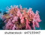 underwater colorful of soft... | Shutterstock . vector #647155447