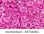 Stock photo beautiful valentine pink rose flowers 64716001