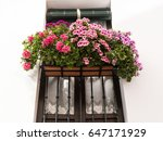 Geranium Flower Pots Growing...