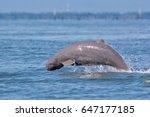 Irrawaddy Dolphin  Ayeyarwaddy...