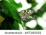 white butterfly | Shutterstock . vector #647183101