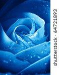 Close Up Beautiul Blue Rose...