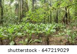 a swampy clearing in amazonian... | Shutterstock . vector #647219029