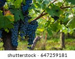 vineyard in provence  france | Shutterstock . vector #647259181