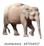 the smallest elephant precious... | Shutterstock . vector #647316517
