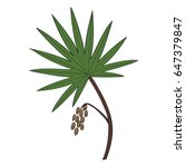 saw palmetto  serenoa repens ... | Shutterstock .eps vector #647379847