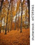autumn trees   Shutterstock . vector #647393461