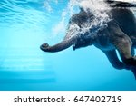 Elephant Show Swimming And Blo...
