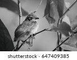 baby birds waiting on their... | Shutterstock . vector #647409385
