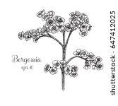 hand drawn bergenia | Shutterstock .eps vector #647412025