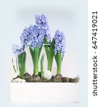 Blue Hyacinths Isolated On A...