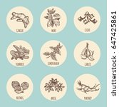vintage style icons with... | Shutterstock .eps vector #647425861