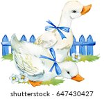 Stock photo cute duck domestic farm bird watercolor illustration 647430427