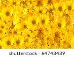 Yellow Gerberas Isolated On...