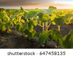 agricultural soy plantation on ...   Shutterstock . vector #647458135