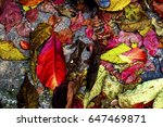 Colourful Autumn Leaves On The...