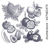 vector collection of hand drawn ... | Shutterstock .eps vector #647482474