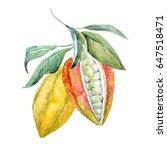 watercolor illustration set of... | Shutterstock . vector #647518471