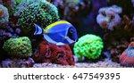 powder blue tang | Shutterstock . vector #647549395