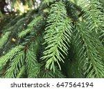 pine tree macro   Shutterstock . vector #647564194