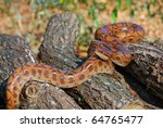 rainbow boa on logs | Shutterstock . vector #64765477