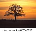 the wisdom tree | Shutterstock . vector #647660719