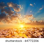 Autumn Leaves In A Rays Of A...