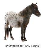 Appaloosa Miniature Horse ...