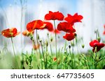 red poppies in the morning... | Shutterstock . vector #647735605