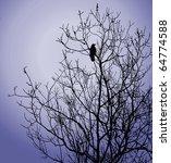 Bird On Tree On Background...