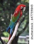beautiful parrot  | Shutterstock . vector #647759845