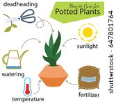 tutorial how to care for potted ... | Shutterstock .eps vector #647801764