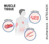 muscle tissue | Shutterstock .eps vector #647814634