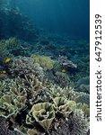 Small photo of Pristine reef scenic with massive Acropora corals, Komodo Indonesia