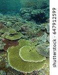 Small photo of Pristine reef scenic with massive Acropora table corals, Komodo Indonesia
