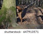 dog peeing   Shutterstock . vector #647913571