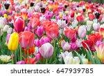 Beautiful Blooming Colorful...