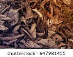 dry leaves | Shutterstock . vector #647981455