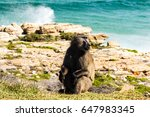 baboon sitting on the shore ... | Shutterstock . vector #647983345