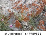 natural rock | Shutterstock . vector #647989591