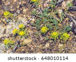 small yellow flowers | Shutterstock . vector #648010114