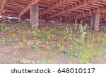 small yellow flowers | Shutterstock . vector #648010117