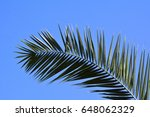 Arched Palm Tree Leaves Patter...