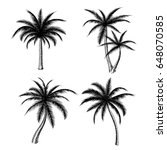 hand drawn palm trees isolated... | Shutterstock .eps vector #648070585