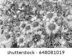 chrysanthemum in the park style ...   Shutterstock . vector #648081019