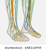 medically accurate anatomy...   Shutterstock .eps vector #648116944